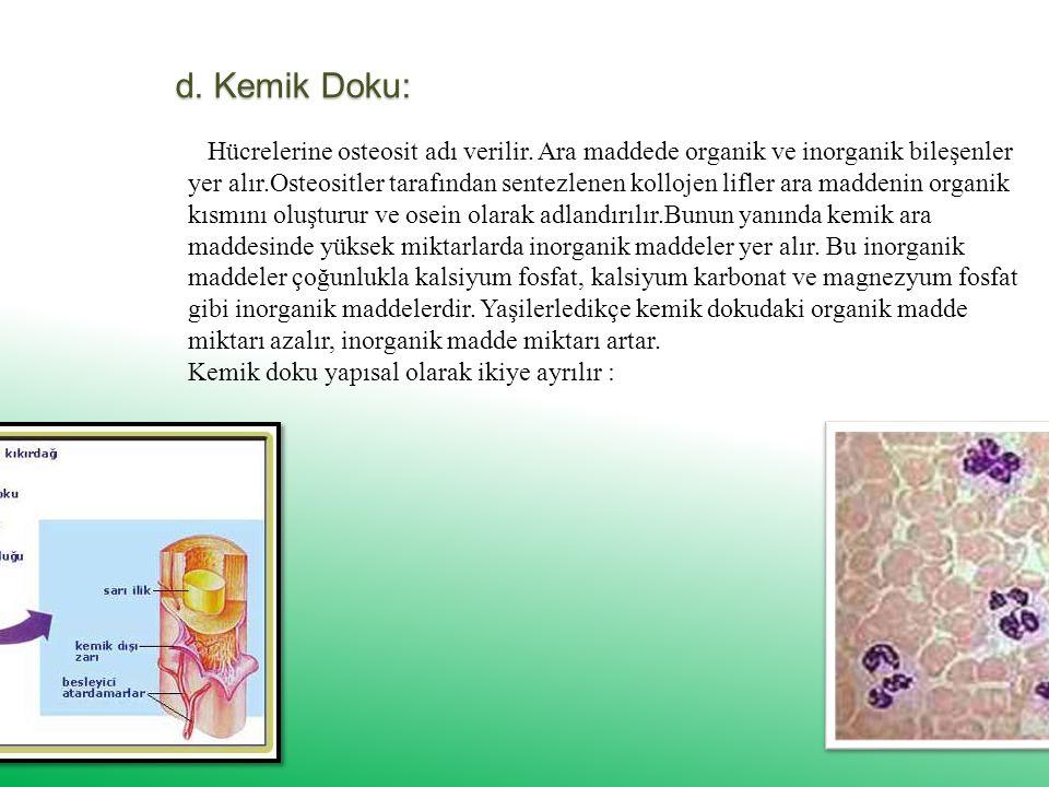d.Kemik Doku: Hücrelerine osteosit adı verilir.