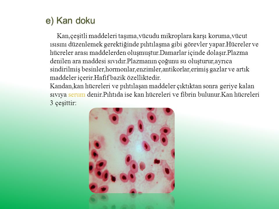 e) Kan doku Kan,çeşitli maddeleri taşıma,vücudu mikroplara karşı koruma,vücut ısısını düzenlemek gerektiğinde pıhtılaşma gibi görevler yapar.Hücreler ve hücreler arası maddelerden oluşmuştur.Damarlar içinde dolaşır.Plazma denilen ara maddesi sıvıdır.Plazmanın çoğunu su oluşturur,ayrıca sindirilmiş besinler,hormonlar,enzimler,antikorlar,erimiş gazlar ve artık maddeler içerir.Hafif bazik özelliktedir.