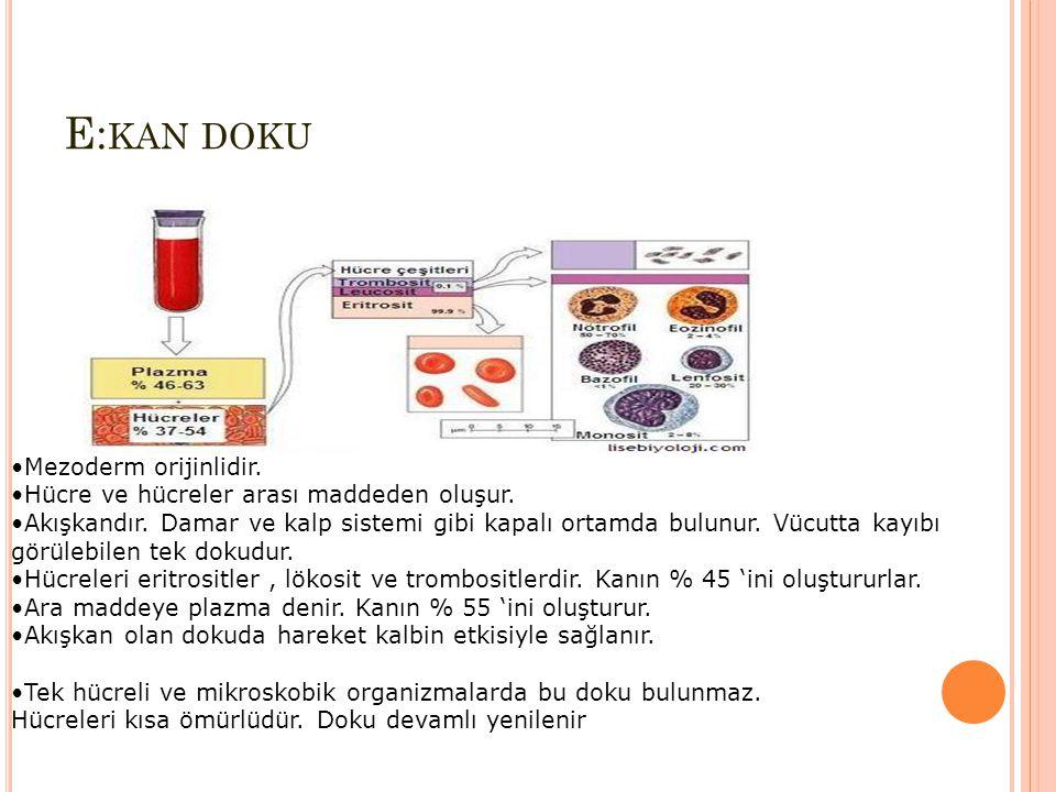 E: KAN DOKU Mezoderm orijinlidir. Hücre ve hücreler arası maddeden oluşur. Akışkandır. Damar ve kalp sistemi gibi kapalı ortamda bulunur. Vücutta kayı