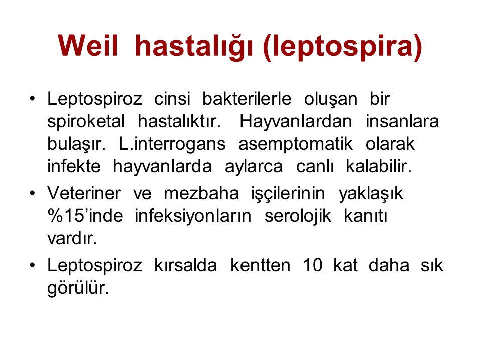 Weil hastalığı (leptospira) Leptospiroz cinsi bakterilerle oluşan bir spiroketal hastalıktır. Hayvanlardan insanlara bulaşır. L.interrogans asemptomat