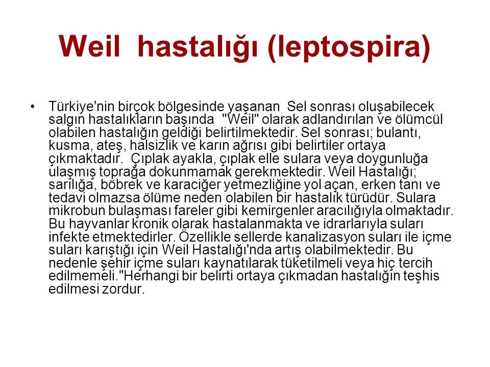 Weil hastalığı (leptospira) Türkiye'nin birçok bölgesinde yaşanan Sel sonrası oluşabilecek salgın hastalıkların başında