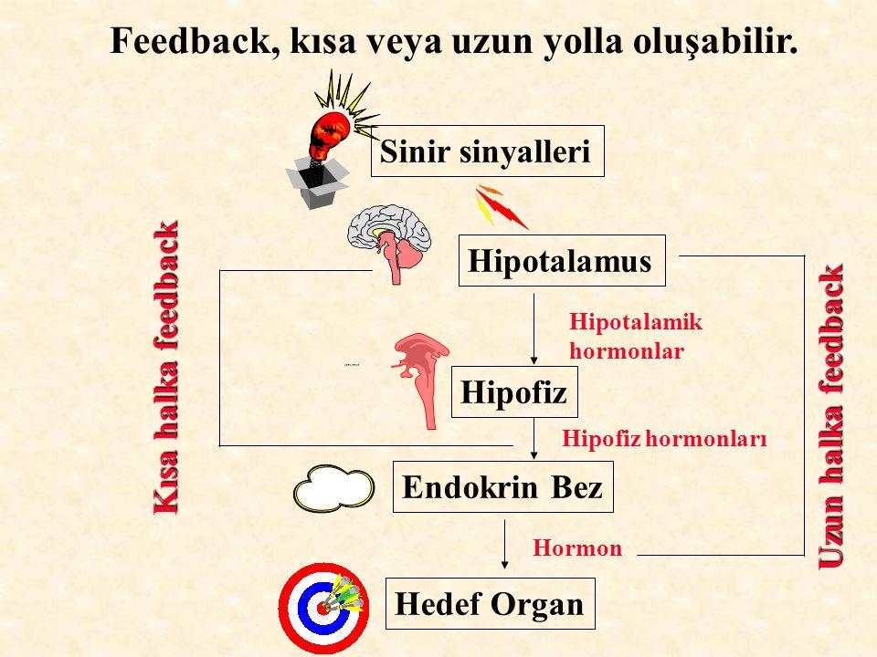 Feedback, kısa veya uzun yolla oluşabilir. Sinir sinyalleri Hipotalamus Optic tract Hipofiz Endokrin Bez Hedef Organ Hipotalamik hormonlar Hipofiz hor