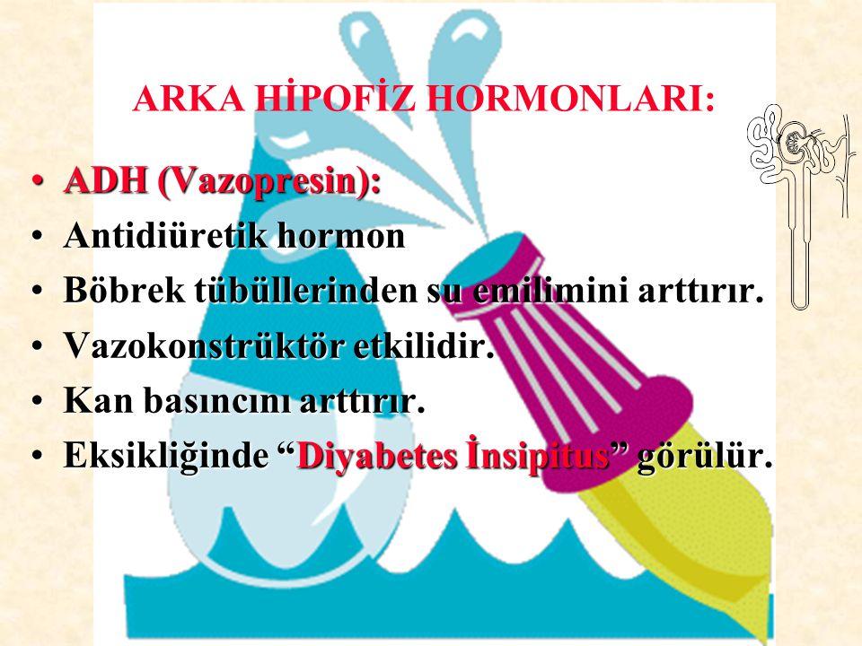 ADH (Vazopresin):ADH (Vazopresin): Antidiüretik hormonAntidiüretik hormon Böbrek tübüllerinden su emilimini arttırır.Böbrek tübüllerinden su emilimini