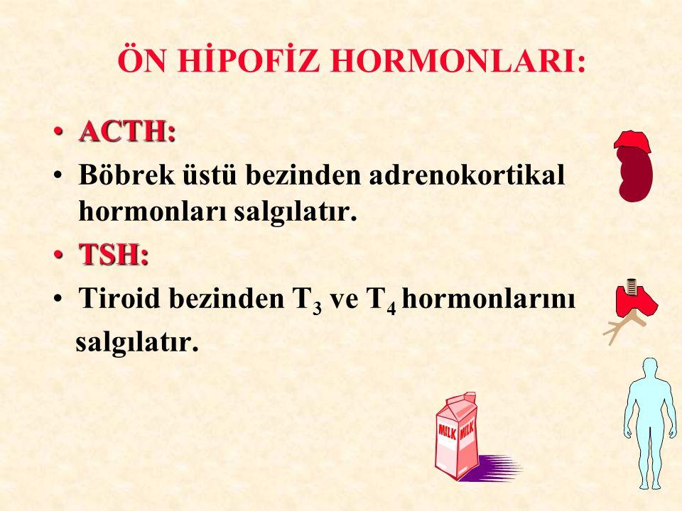 ÖN HİPOFİZ HORMONLARI: ACTH:ACTH: Böbrek üstü bezinden adrenokortikal hormonları salgılatır. TSH:TSH: Tiroid bezinden T 3 ve T 4 hormonlarını salgılat