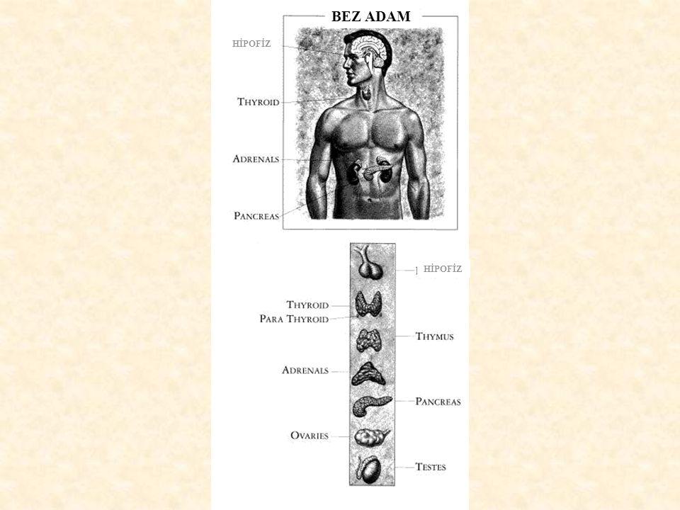 Endokrin sistem ve sinir sistemi: Bir takım mesajlar iletir, Hedef organlar üzerinde kontrol sağlar ve homeostazda rol oynar.