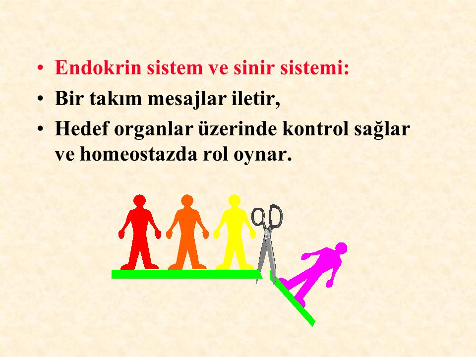 HİPOTALAMİK HORMON VE FAKTÖRLER GHRF: Büyüme hormonu salgılattırıcı faktörGHRF: Büyüme hormonu salgılattırıcı faktör PRF: Prolaktin salgılattırıcı faktörPRF: Prolaktin salgılattırıcı faktör Gn-RH: Gonadotropin salgılattırıcı faktörGn-RH: Gonadotropin salgılattırıcı faktör TRH: TSH salgılattırıcı hormonTRH: TSH salgılattırıcı hormon CRH: Kortikotropin salgılattırıcı hormonCRH: Kortikotropin salgılattırıcı hormon SMT: SomatostatinSMT: Somatostatin PİF: Prolaktin baskılayıcı faktörPİF: Prolaktin baskılayıcı faktör MİF: Melanosit uyarıcı hormonu baskılayan faktörMİF: Melanosit uyarıcı hormonu baskılayan faktör