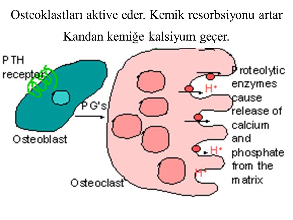 Osteoklastları aktive eder. Kemik resorbsiyonu artar Kandan kemiğe kalsiyum geçer.