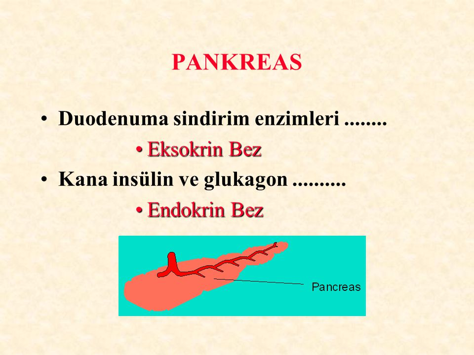 Duodenuma sindirim enzimleri........ Eksokrin BezEksokrin Bez Kana insülin ve glukagon.......... Endokrin BezEndokrin Bez PANKREAS