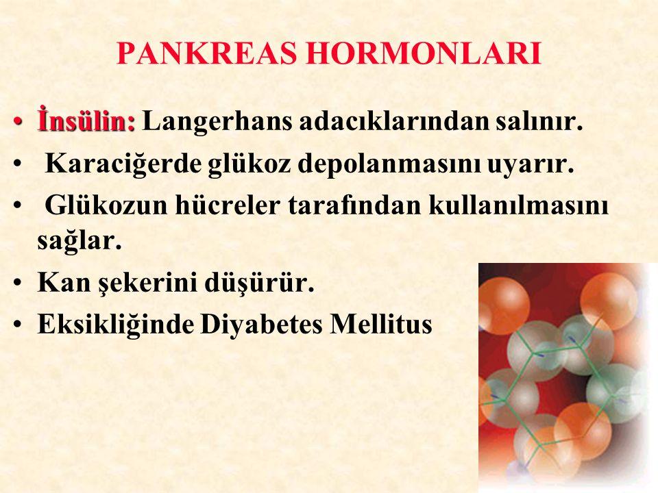 İnsülin:İnsülin: Langerhans adacıklarından salınır. Karaciğerde glükoz depolanmasını uyarır. Glükozun hücreler tarafından kullanılmasını sağlar. Kan ş