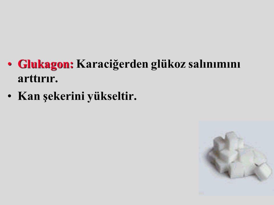 Glukagon:Glukagon: Karaciğerden glükoz salınımını arttırır. Kan şekerini yükseltir.