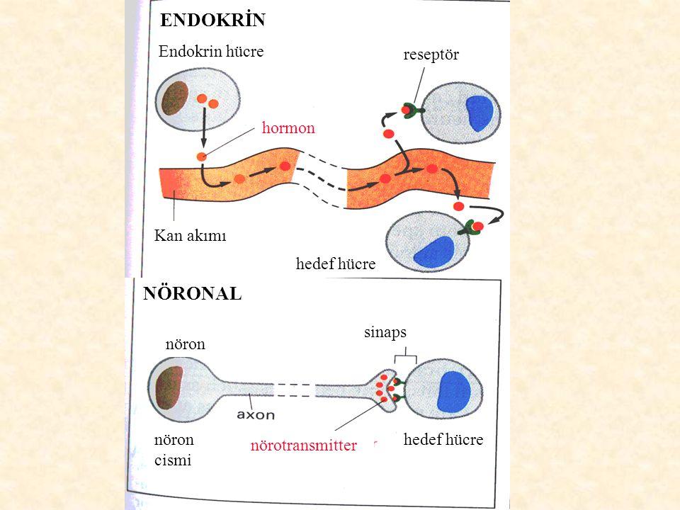 ENDOKRİN NÖRONAL Endokrin hücre reseptör Kan akımı hedef hücre nöron sinaps hedef hücrenöron cismi hormon nörotransmitter