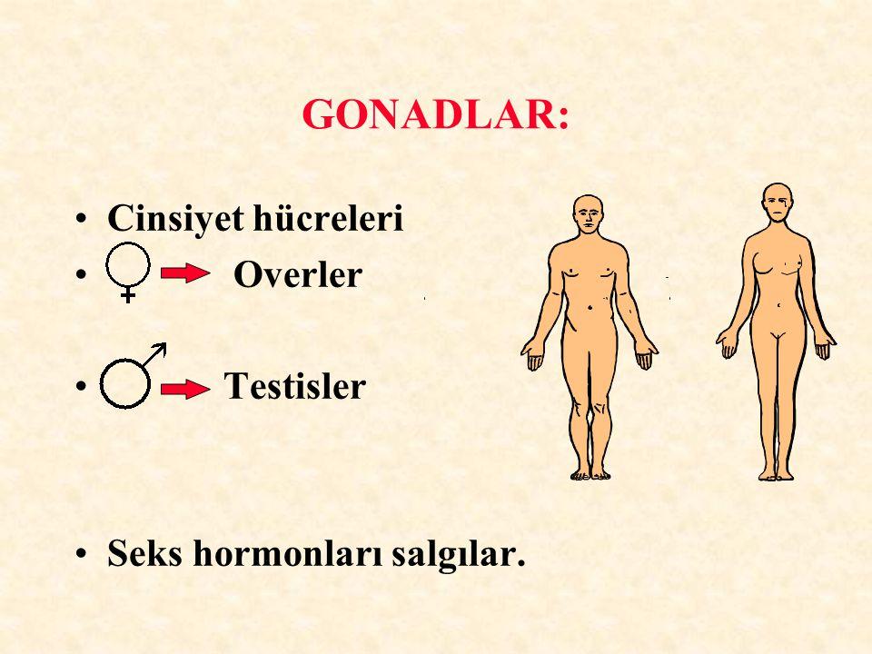 GONADLAR: Cinsiyet hücreleri Overler Testisler Seks hormonları salgılar.
