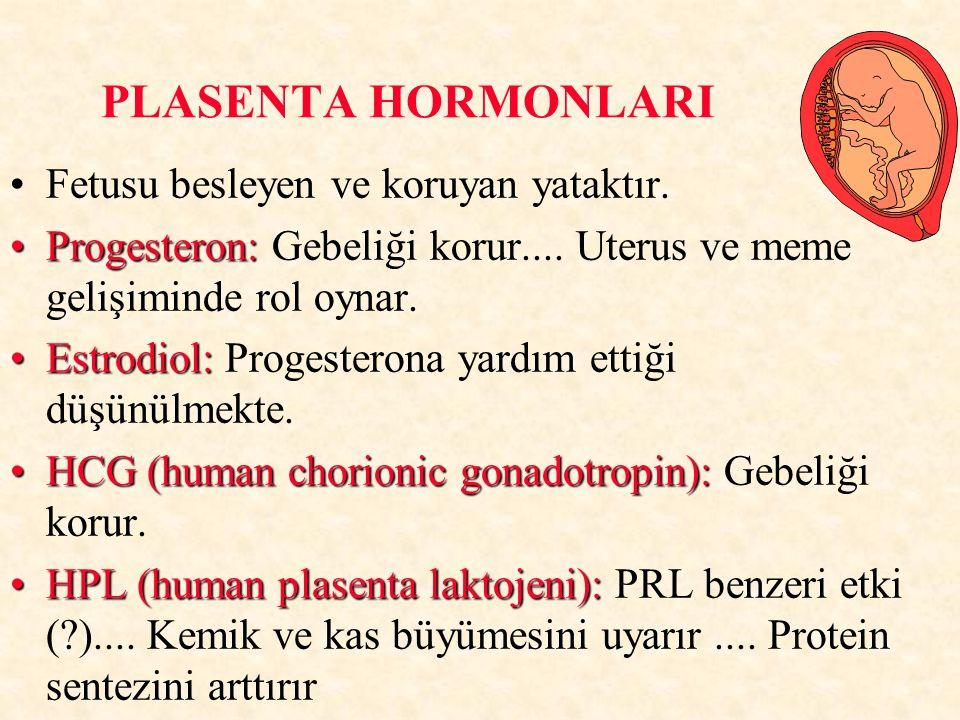 PLASENTA HORMONLARI Fetusu besleyen ve koruyan yataktır. Progesteron:Progesteron: Gebeliği korur.... Uterus ve meme gelişiminde rol oynar. Estrodiol:E