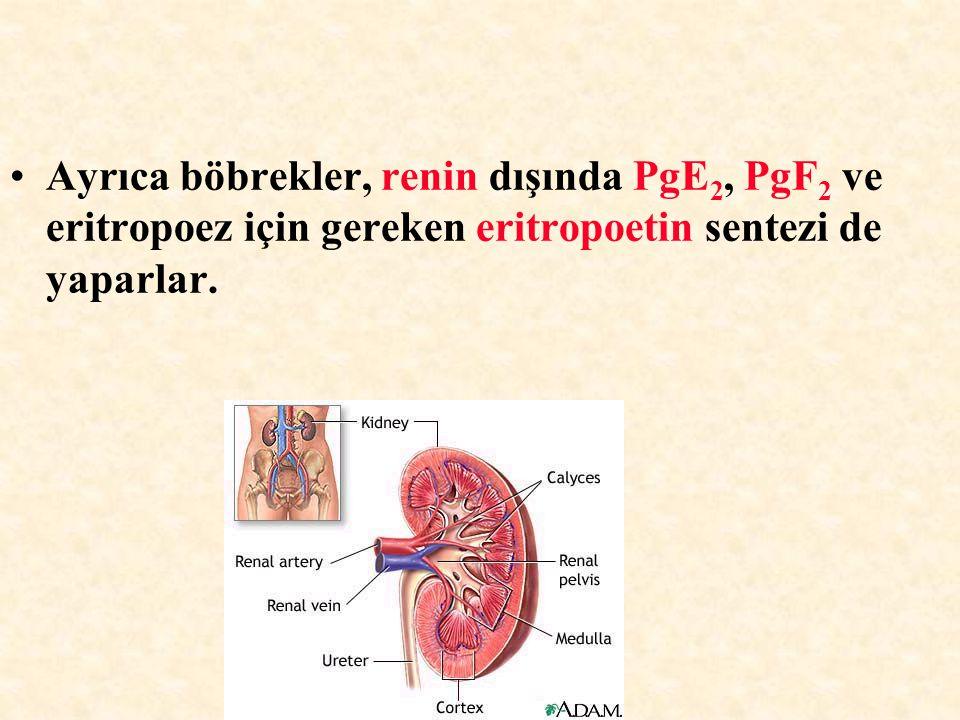 Ayrıca böbrekler, renin dışında PgE 2, PgF 2 ve eritropoez için gereken eritropoetin sentezi de yaparlar.