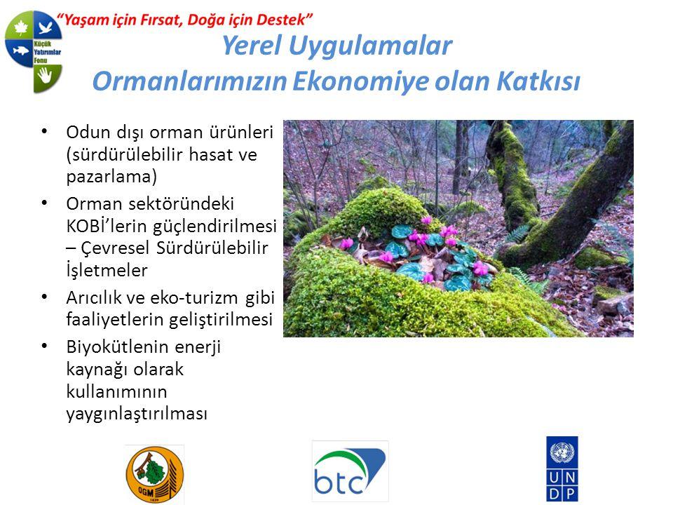 Yerel Uygulamalar Ormanlarımızın Ekonomiye olan Katkısı Odun dışı orman ürünleri (sürdürülebilir hasat ve pazarlama) Orman sektöründeki KOBİ'lerin güçlendirilmesi – Çevresel Sürdürülebilir İşletmeler Arıcılık ve eko-turizm gibi faaliyetlerin geliştirilmesi Biyokütlenin enerji kaynağı olarak kullanımının yaygınlaştırılması