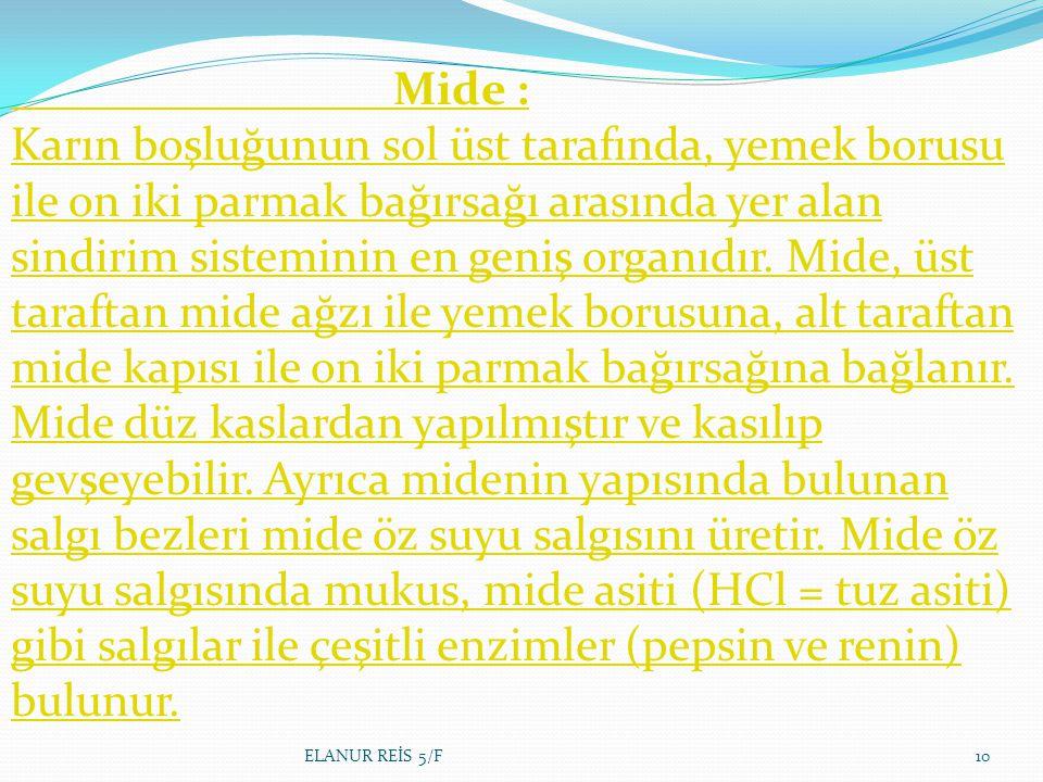 Mide : Karın boşluğunun sol üst tarafında, yemek borusu ile on iki parmak bağırsağı arasında yer alan sindirim sisteminin en geniş organıdır.