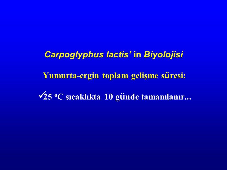 Carpoglyphus lactis' in Biyolojisi Yumurta-ergin toplam gelişme s ü resi: 25 o C sıcaklıkta 10 g ü nde tamamlanır...