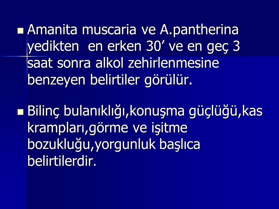 Amanita muscaria ve A.pantherina yedikten en erken 30' ve en geç 3 saat sonra alkol zehirlenmesine benzeyen belirtiler görülür.