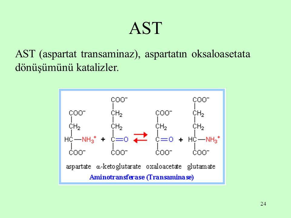 24 AST AST (aspartat transaminaz), aspartatın oksaloasetata dönüşümünü katalizler.