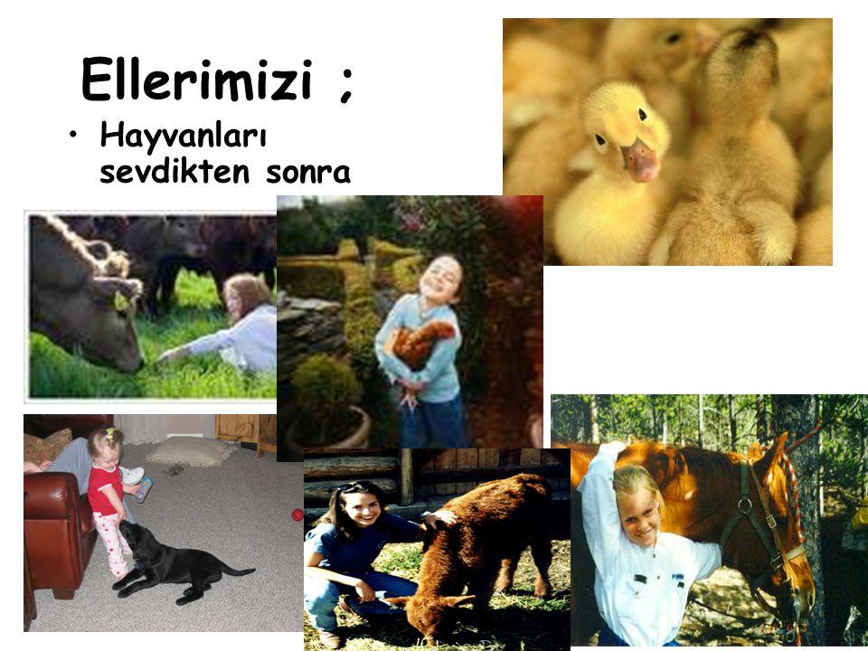 Bulaşıcı Hastalıklar Şubesi 19 Ellerimizi ; Hayvanları sevdikten sonra