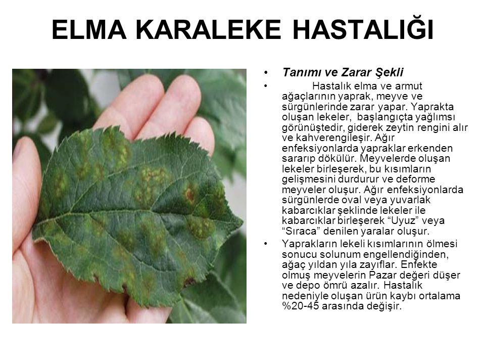 ELMA KARALEKE HASTALIĞI Tanımı ve Zarar Şekli Hastalık elma ve armut ağaçlarının yaprak, meyve ve sürgünlerinde zarar yapar. Yaprakta oluşan lekeler,