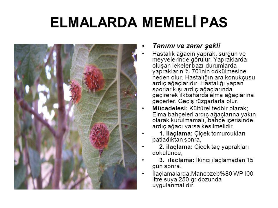 ELMALARDA MEMELİ PAS Tanımı ve zarar şekli Hastalık ağacın yaprak, sürgün ve meyvelerinde görülür. Yapraklarda oluşan lekeler bazı durumlarda yaprakla