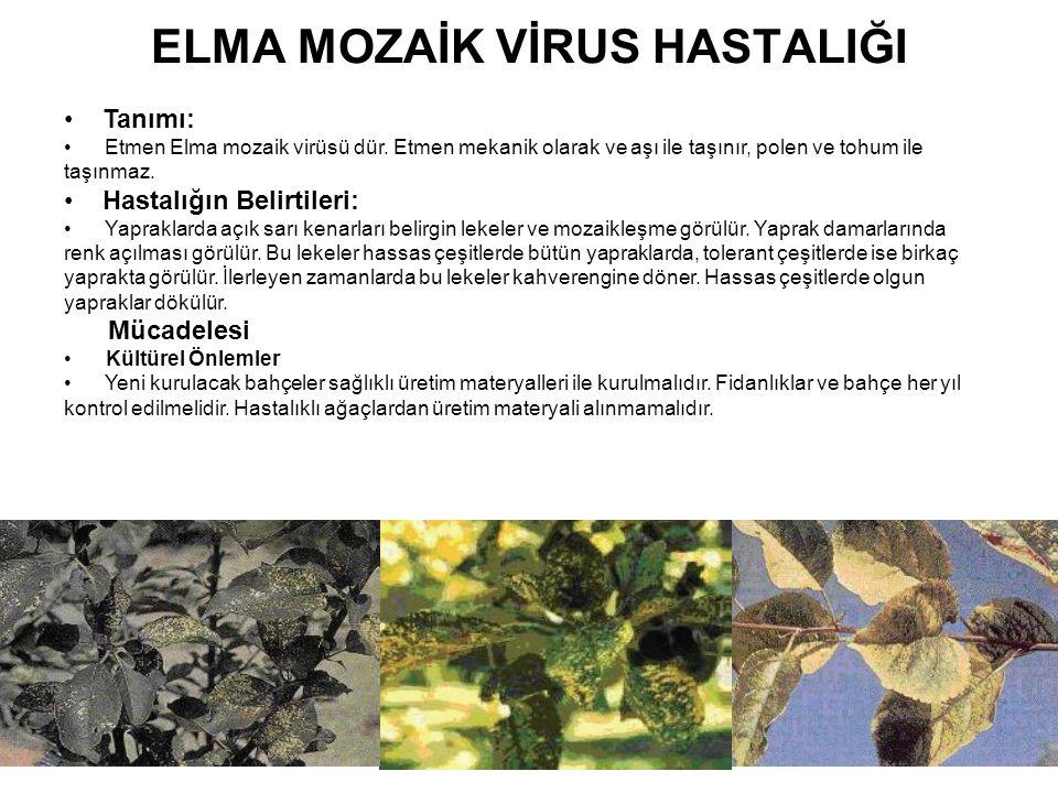 ELMA MOZAİK VİRUS HASTALIĞI Tanımı: Etmen Elma mozaik virüsü dür. Etmen mekanik olarak ve aşı ile taşınır, polen ve tohum ile taşınmaz. Hastalığın Bel