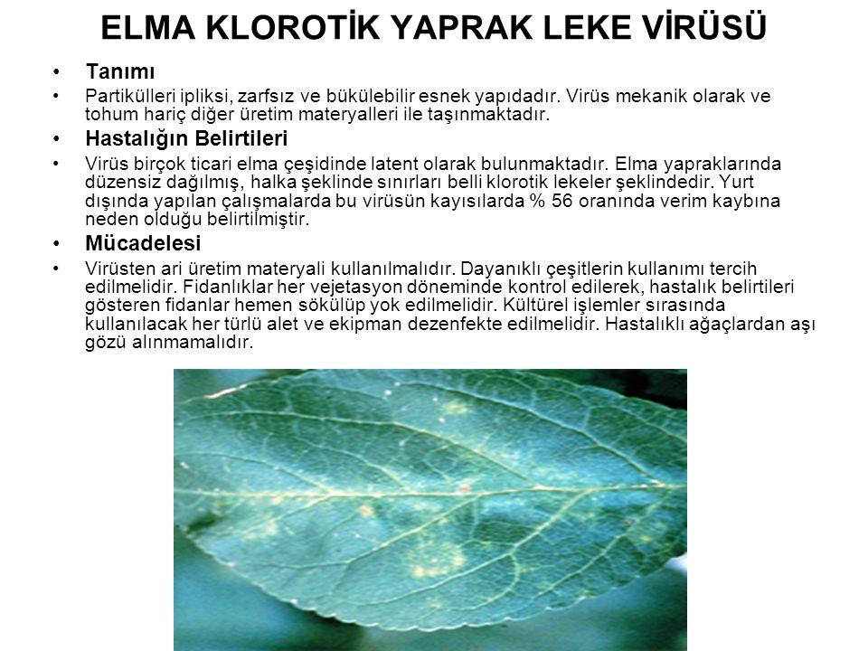 ELMA KLOROTİK YAPRAK LEKE VİRÜSÜ Tanımı Partikülleri ipliksi, zarfsız ve bükülebilir esnek yapıdadır. Virüs mekanik olarak ve tohum hariç diğer üretim