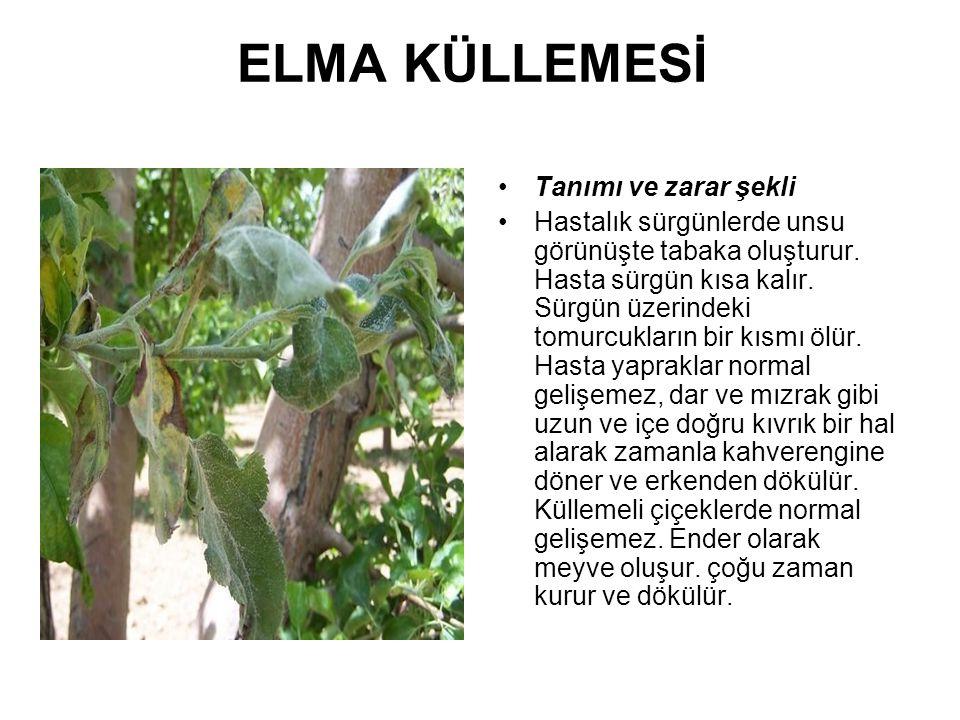 ELMA KÜLLEMESİ MÜCADELE Kültürel Önlemler: Kültürel tedbir olarak; kışın budama esnasında küllemeli sürgünler hastalıklı kısmın 15 cm.