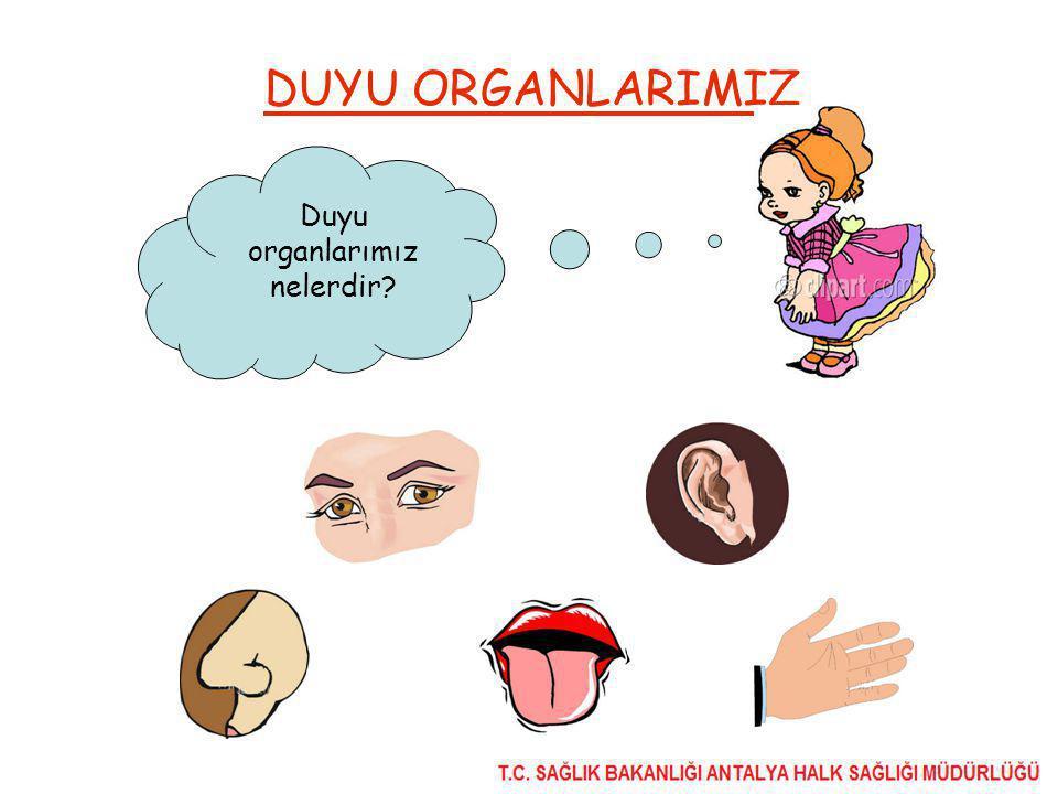 DUYU ORGANLARIMIZ Duyu organlarımız nelerdir?