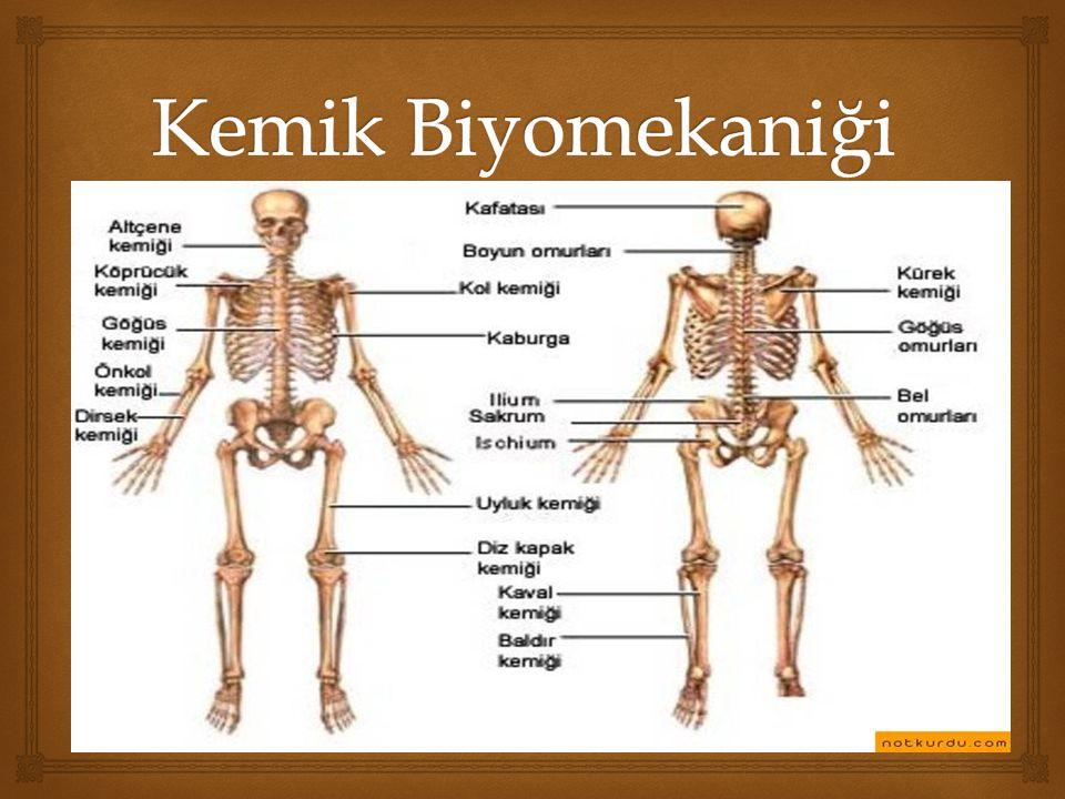   Kemik, vücudu oluşturan dokular arasında en sert olanıdır.