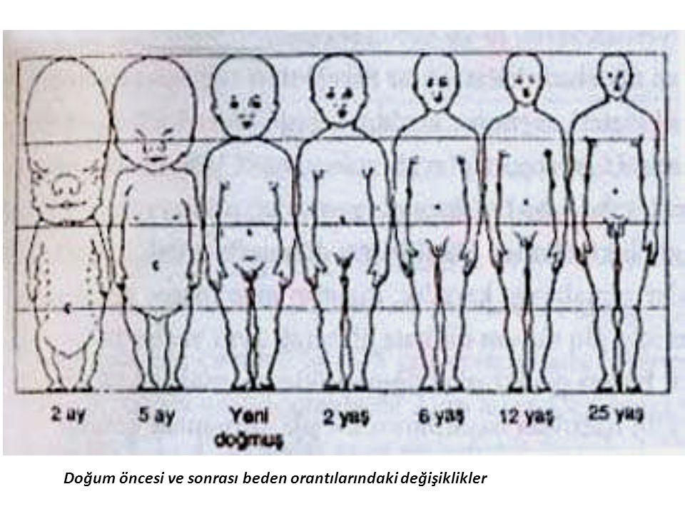Doğum öncesi ve sonrası beden orantılarındaki değişiklikler