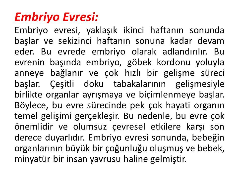 Embriyo Evresi: Embriyo evresi, yaklaşık ikinci haftanın sonunda başlar ve sekizinci haftanın sonuna kadar devam eder. Bu evrede embriyo olarak adland