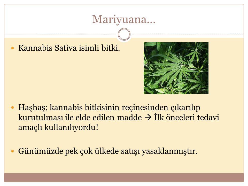 Mariyuana… Kannabis Sativa isimli bitki. Haşhaş; kannabis bitkisinin reçinesinden çıkarılıp kurutulması ile elde edilen madde  İlk önceleri tedavi am