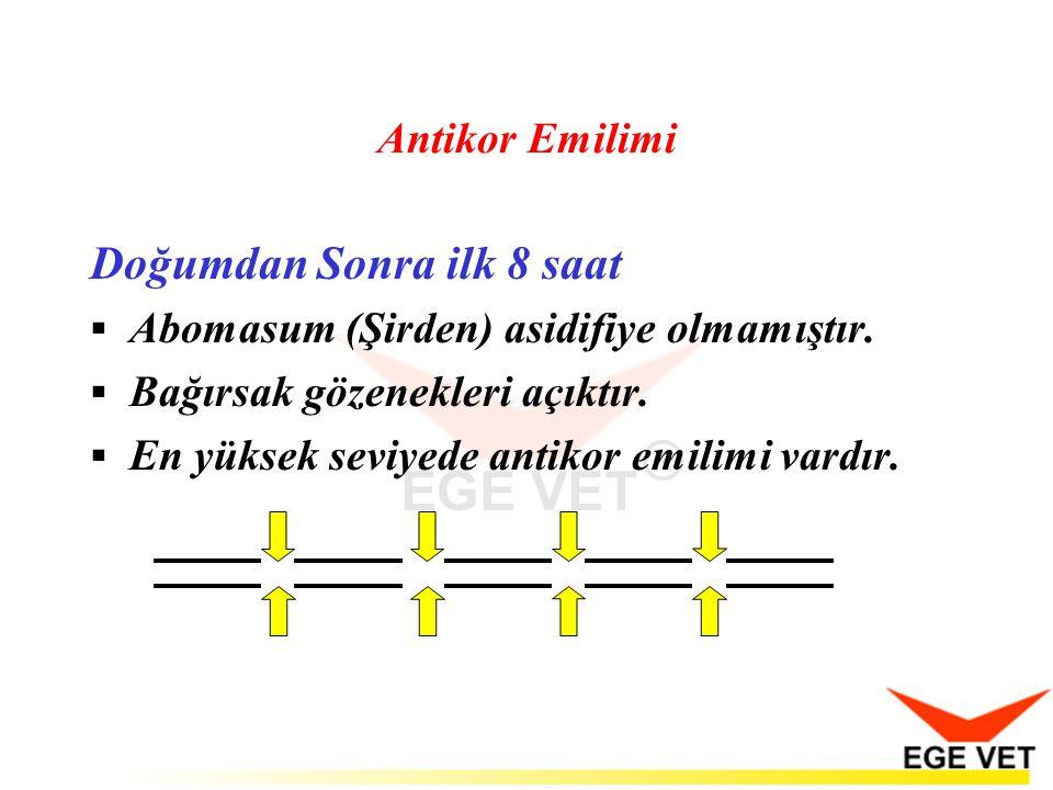 Antikor Emilimi Doğumdan Sonra ilk 8 saat  Abomasum (Şirden) asidifiye olmamıştır.  Bağırsak gözenekleri açıktır.  En yüksek seviyede antikor emili