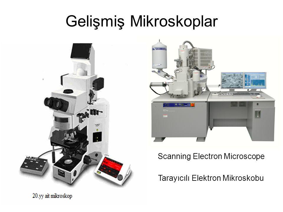 Gelişmiş Mikroskoplar Scanning Electron Microscope Tarayıcılı Elektron Mikroskobu