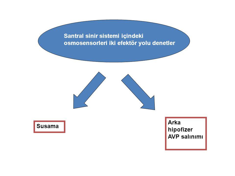 Vazopresin AVP siklik nonapeptid.Oksitosine benzer yapıda.