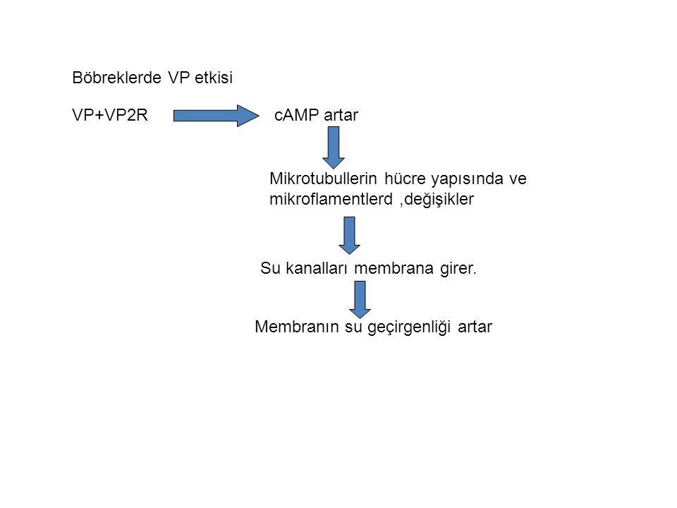 V1a ve V1bFosfolipaz C ile birleşir ve intraselüler Ca ve Fosfotidilinositol sinyal ara yolları ile etkir V2 Gαs ile birleşir cAMP yapımı ile etkir