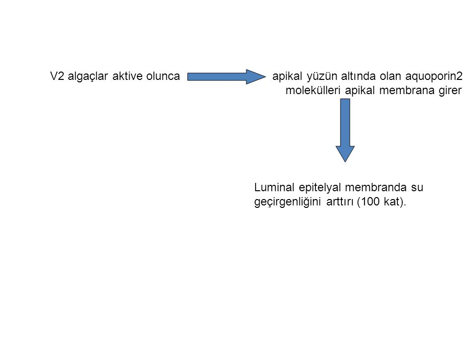Vazopressin eksikliği Poliüri ( >2L/m2/gün) Polidipsi Diyabetes İnsipidus