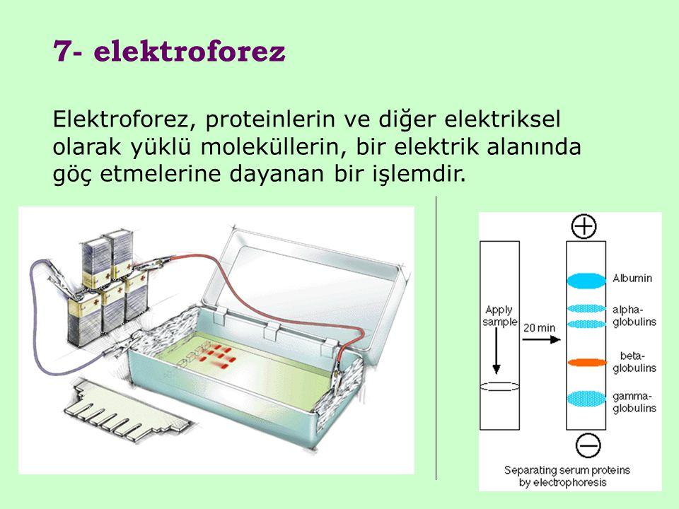 7- elektroforez Elektroforez, proteinlerin ve diğer elektriksel olarak yüklü moleküllerin, bir elektrik alanında göç etmelerine dayanan bir işlemdir.