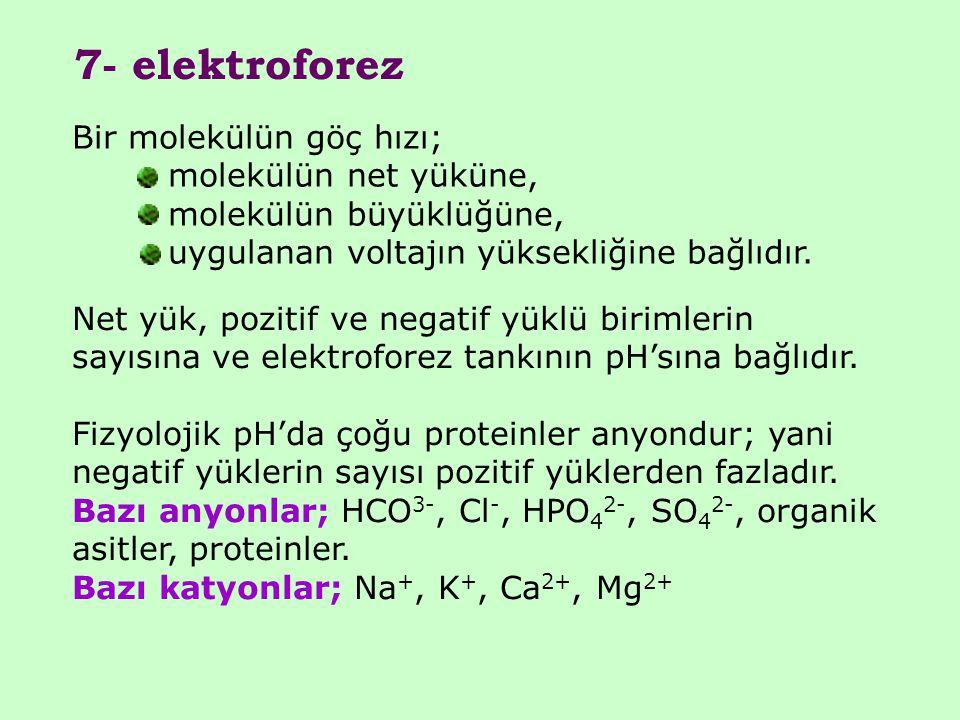 7- elektroforez Bir molekülün göç hızı; molekülün net yüküne, molekülün büyüklüğüne, uygulanan voltajın yüksekliğine bağlıdır. Net yük, pozitif ve neg