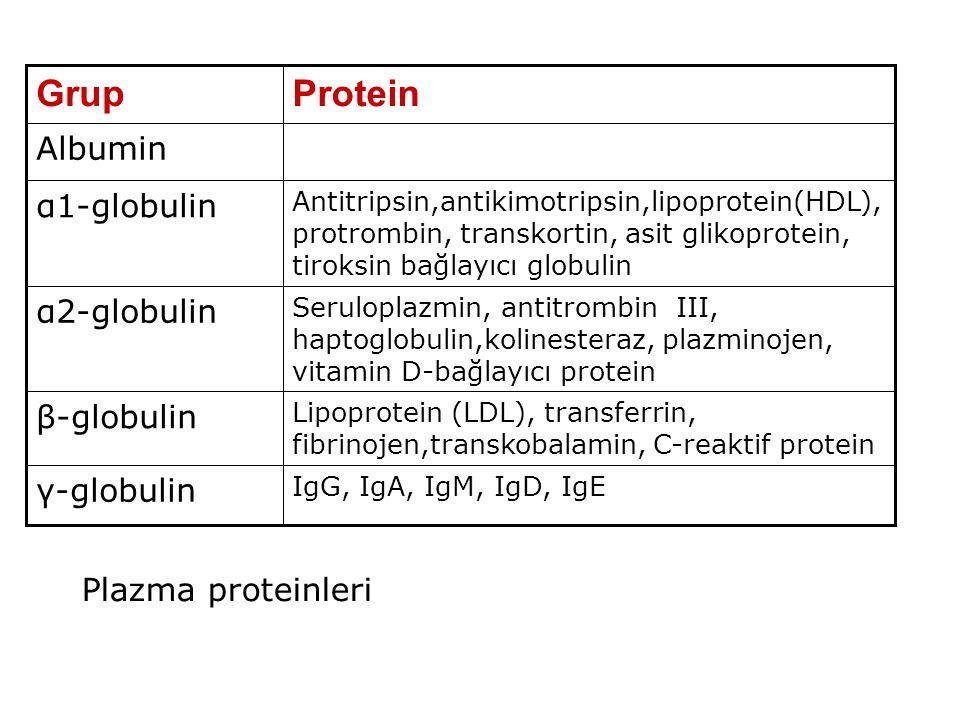 IgG, IgA, IgM, IgD, IgE γ-globulin Lipoprotein (LDL), transferrin, fibrinojen,transkobalamin, C-reaktif protein β-globulin Seruloplazmin, antitrombin