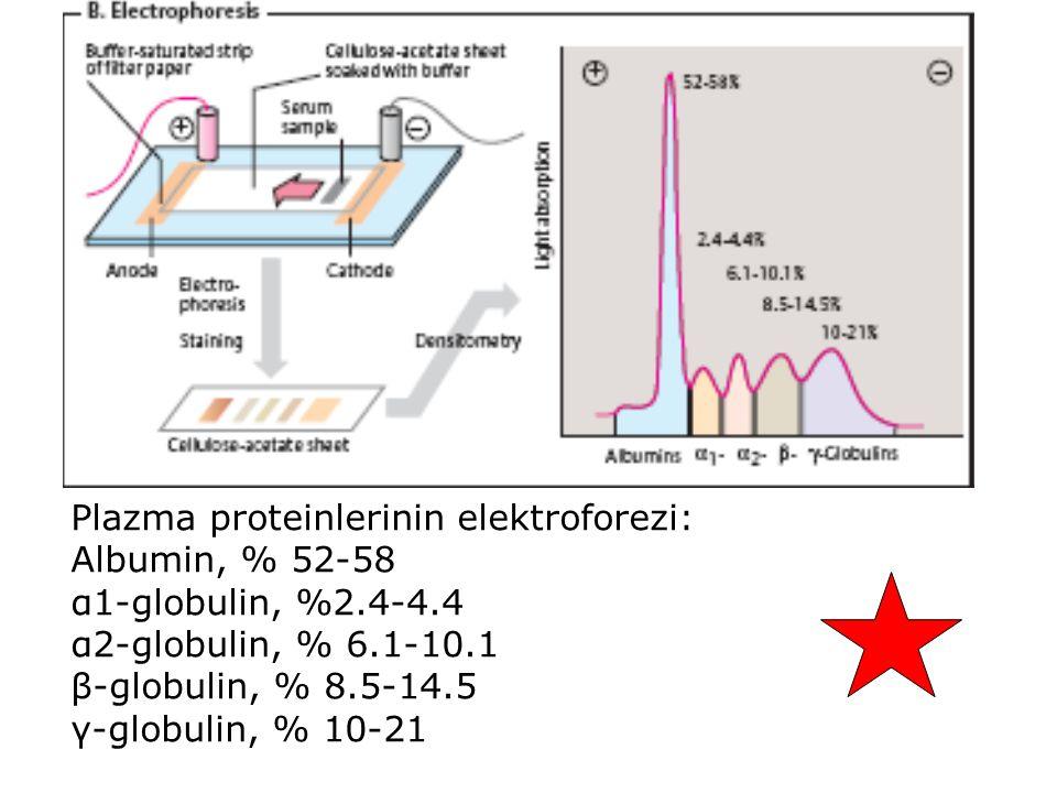 Plazma proteinlerinin elektroforezi: Albumin, % 52-58 α1-globulin, %2.4-4.4 α2-globulin, % 6.1-10.1 β-globulin, % 8.5-14.5 γ-globulin, % 10-21