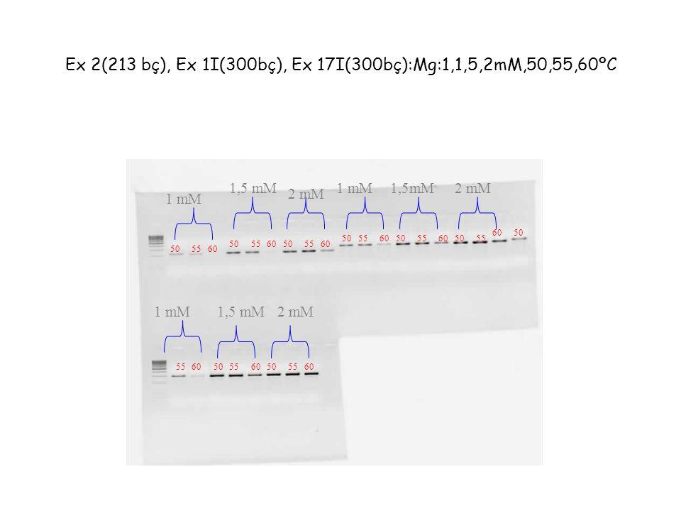 Ex 2(213 bç), Ex 1I(300bç), Ex 17I(300bç):Mg:1,1,5,2mM,50,55,60ºC 505560 505560505560 5055605055605055 6050 5560505560505560 1 mM 2 mM 1,5 mM1 mM1,5mM