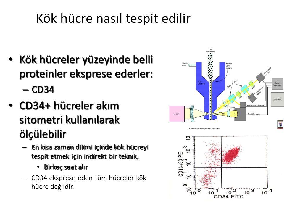 Kök hücreler yüzeyinde belli proteinler eksprese ederler: Kök hücreler yüzeyinde belli proteinler eksprese ederler: – CD34 CD34+ hücreler akım sitomet