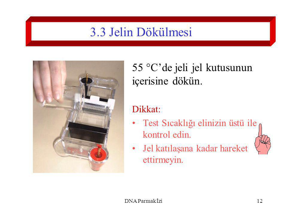 13 3.4 Odacığın Hazırlanması Jel katılaştıktan sonra elektroforez odacığının metal plakasını sökün.
