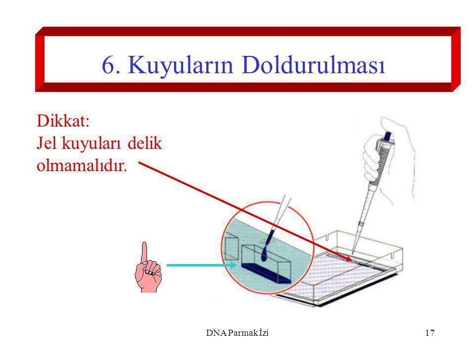 18 7.Jel Elektroforezi (120 V ca.