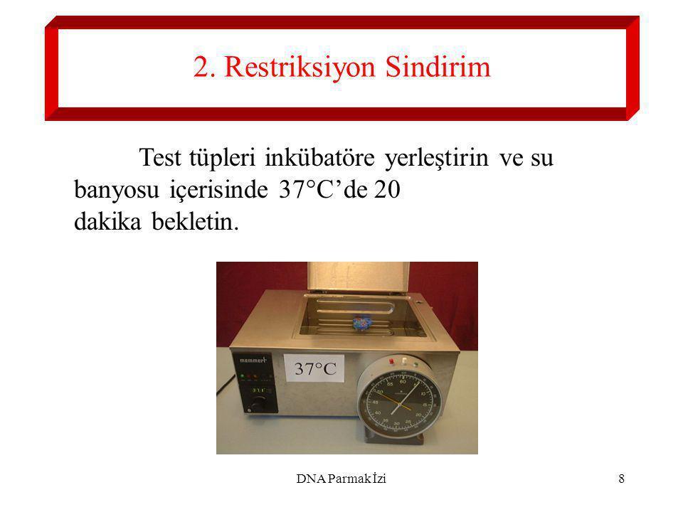 DNA Parmak İzi9 3. Elektroforez'in Hazırlanması
