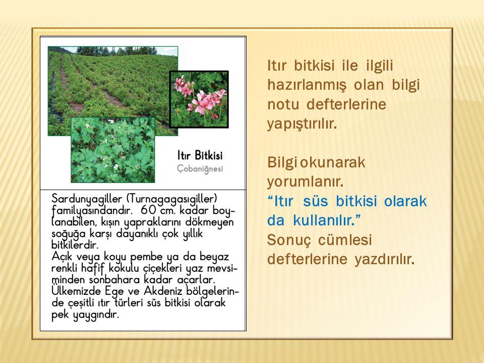 """Itır bitkisi ile ilgili hazırlanmış olan bilgi notu defterlerine yapıştırılır. Bilgi okunarak yorumlanır. """"Itır süs bitkisi olarak da kullanılır."""" Son"""