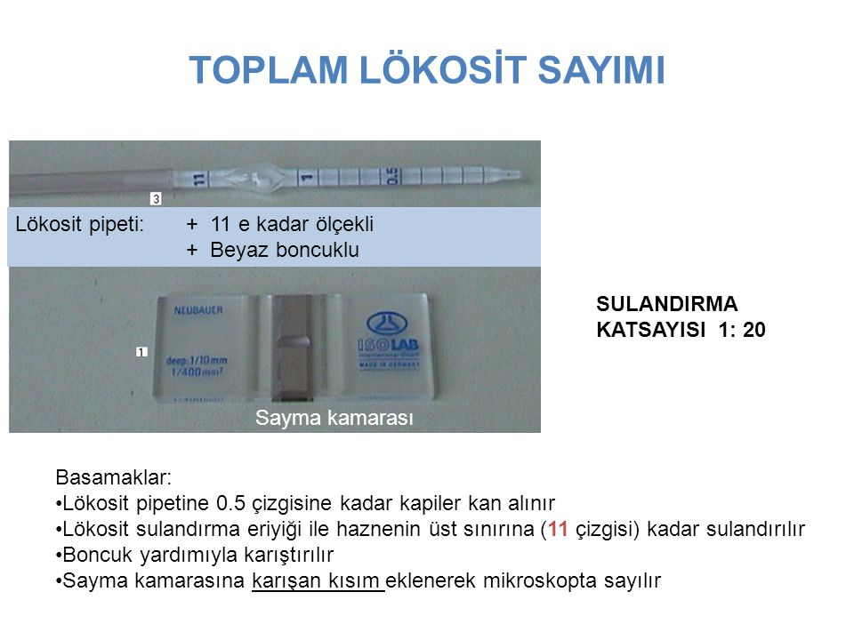 TOPLAM LÖKOSİT SAYIMI Lökosit pipeti: + 11 e kadar ölçekli + Beyaz boncuklu Sayma kamarası Basamaklar: Lökosit pipetine 0.5 çizgisine kadar kapiler ka
